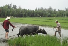 Hoi An Farming Tour